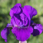 graphicp/thumbnail/Flower-Shower.jpg