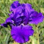 Montys-Sweet-Blue.jpg