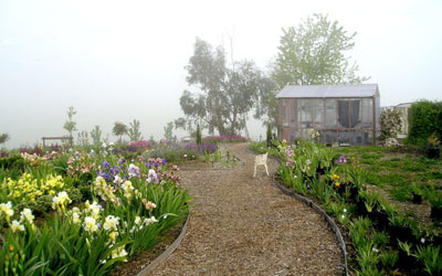 The greenhouse at the edge of the fog